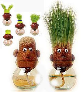 Голова-трава прически из пшеницы