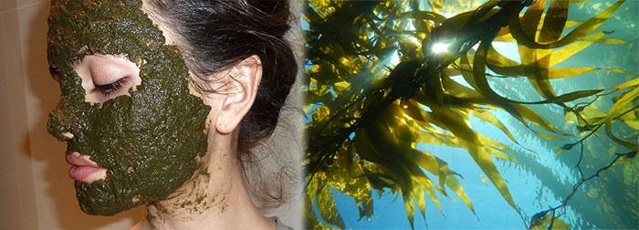 маска-из-ламинарии-морской-капусты от морщин